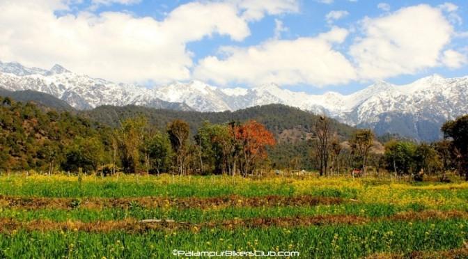 Palampur – Kangra (Himachal Pradesh, India)
